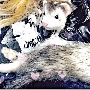 Pleather jacket for ferrets